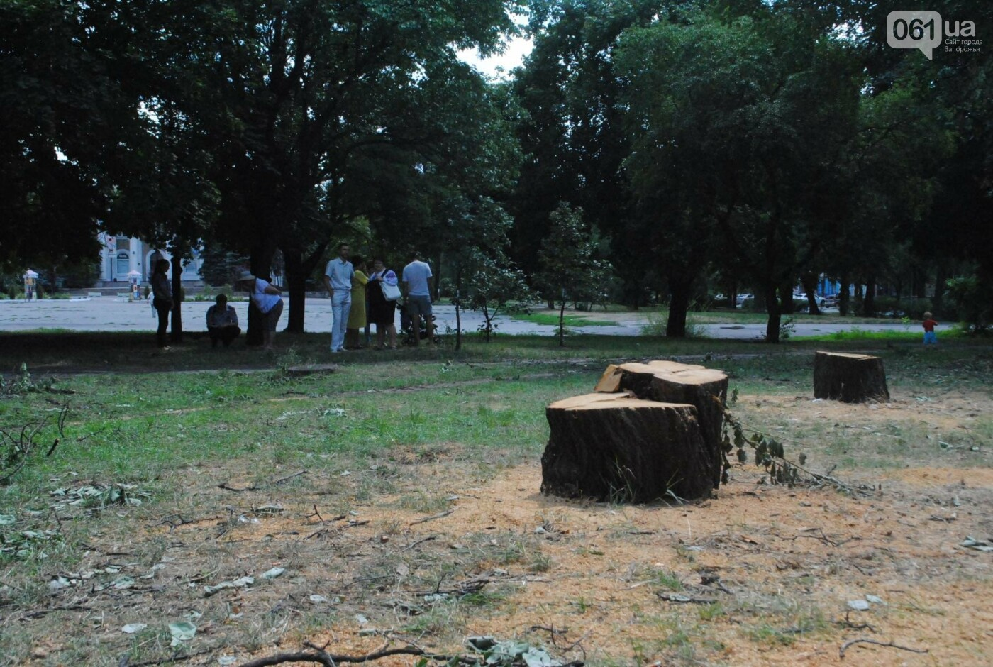 В сквере Яланского начали пилить деревья: неизвестные провели работы сегодня утром, фото-2