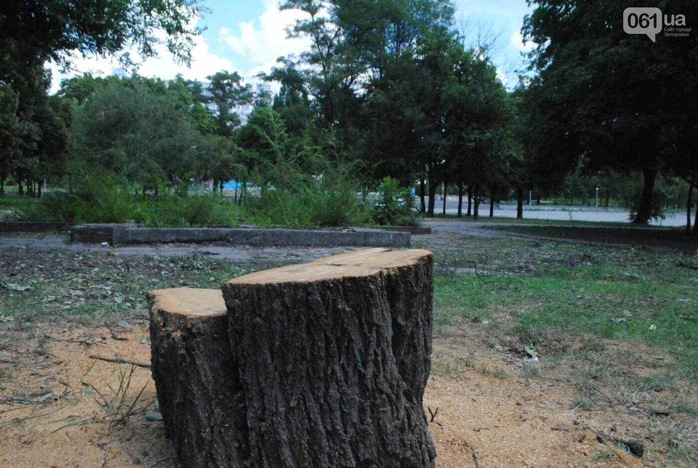В сквере Яланского начали пилить деревья: неизвестные провели работы сегодня утром, фото-1