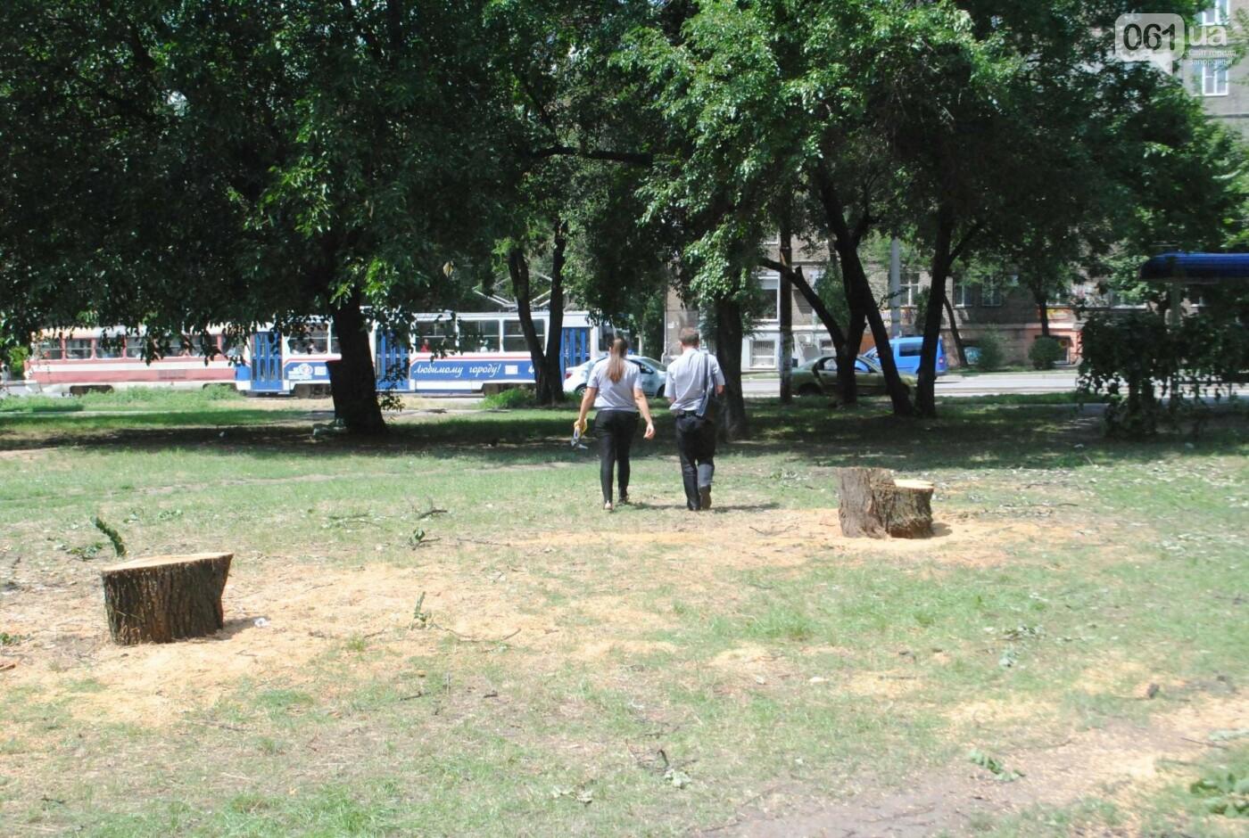 В сквере Яланского начали пилить деревья: неизвестные провели работы сегодня утром, фото-3
