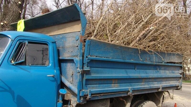 """Деревья и ветки, упавшие во время урагана в Запорожье, должен убрать """"Зеленстрой"""", фото-1"""