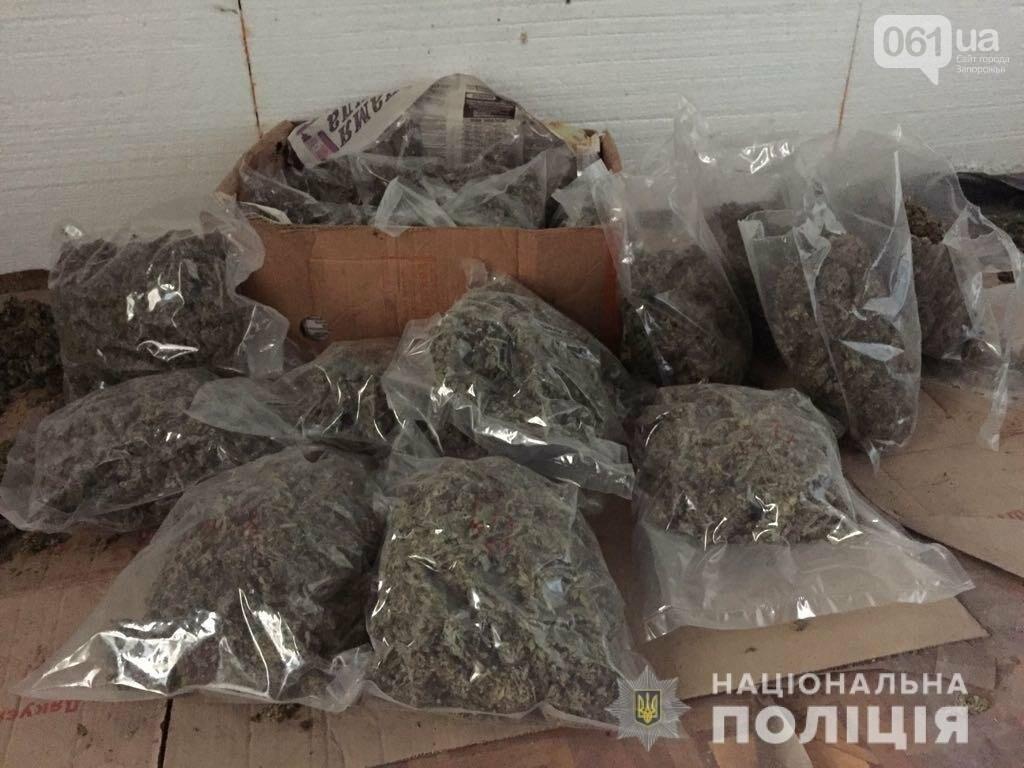 Отборная конопля и марихуана на 4,5 миллиона — запорожские правоохранители провели рейд, фото-1