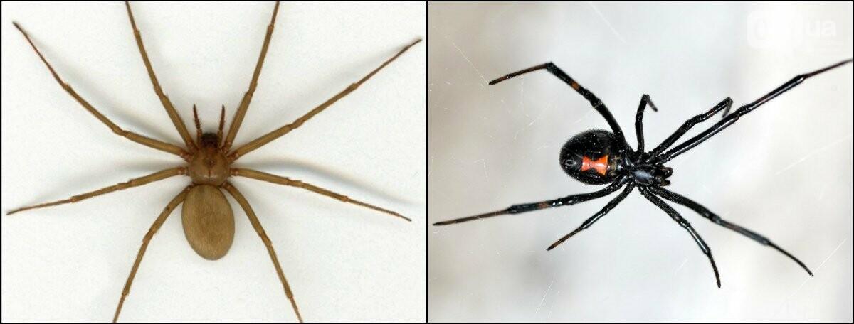 Запорожцам сообщили, куда обращаться при укусах пауков, фото-1