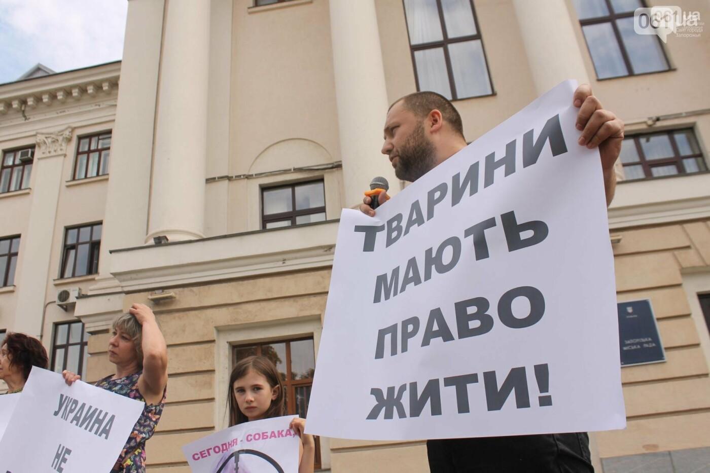 В Запорожье проведут марш в защиту животных, фото-2
