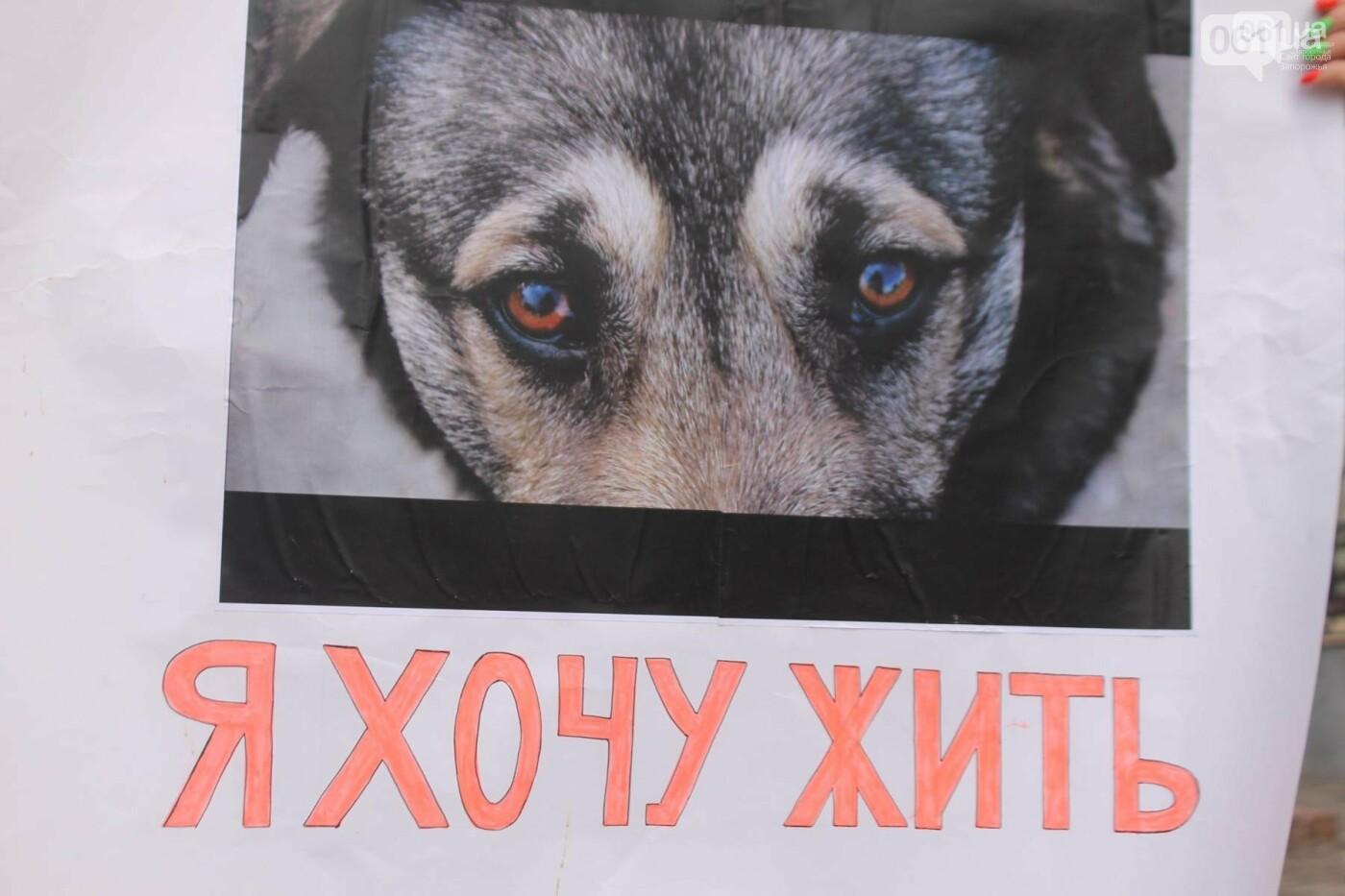 В Запорожье проведут марш в защиту животных, фото-3