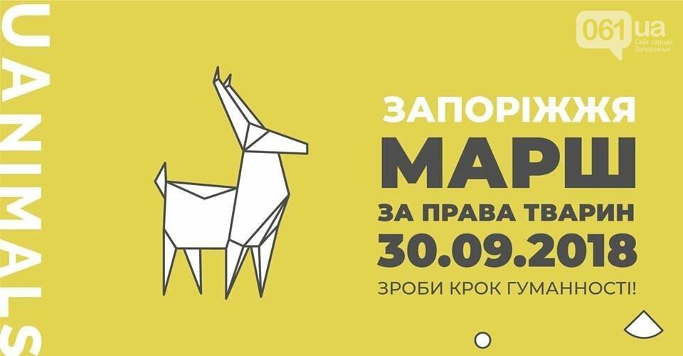 В Запорожье проведут марш в защиту животных, фото-1