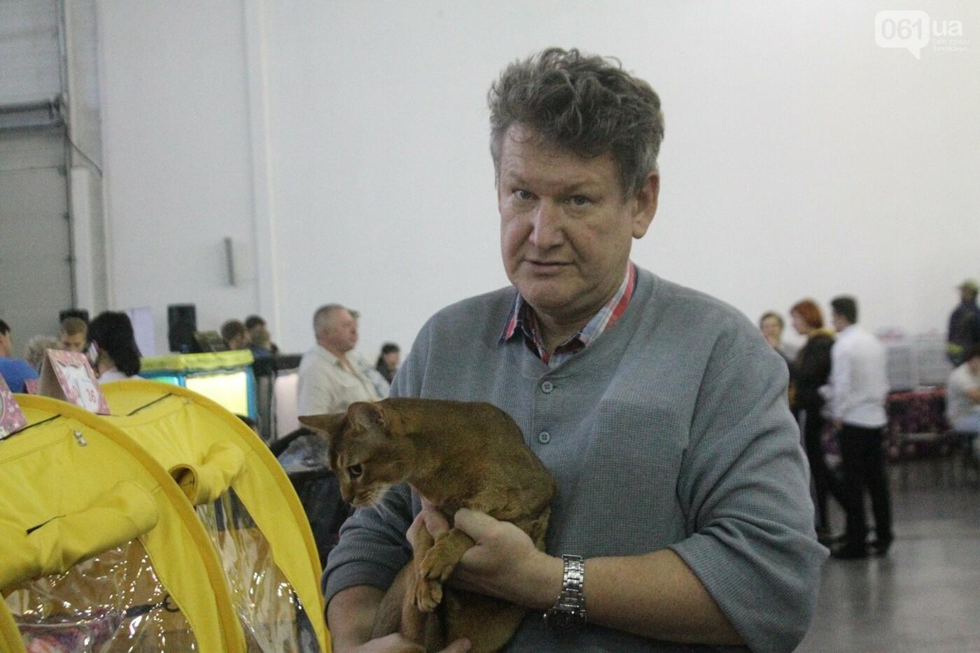 Как в Запорожье проходит международная выставка кошек, – ФОТОРЕПОРТАЖ, фото-26