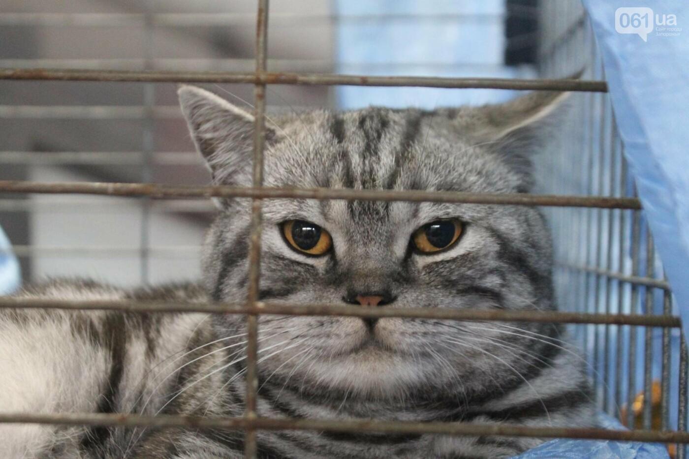 Как в Запорожье проходит международная выставка кошек, – ФОТОРЕПОРТАЖ, фото-12