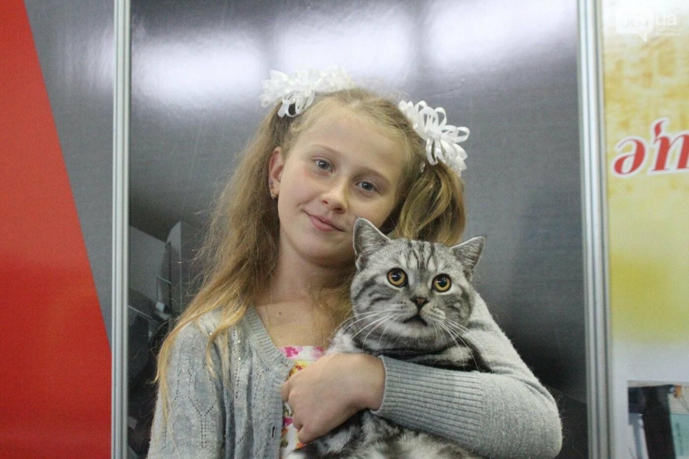 Как в Запорожье проходит международная выставка кошек, – ФОТОРЕПОРТАЖ, фото-37