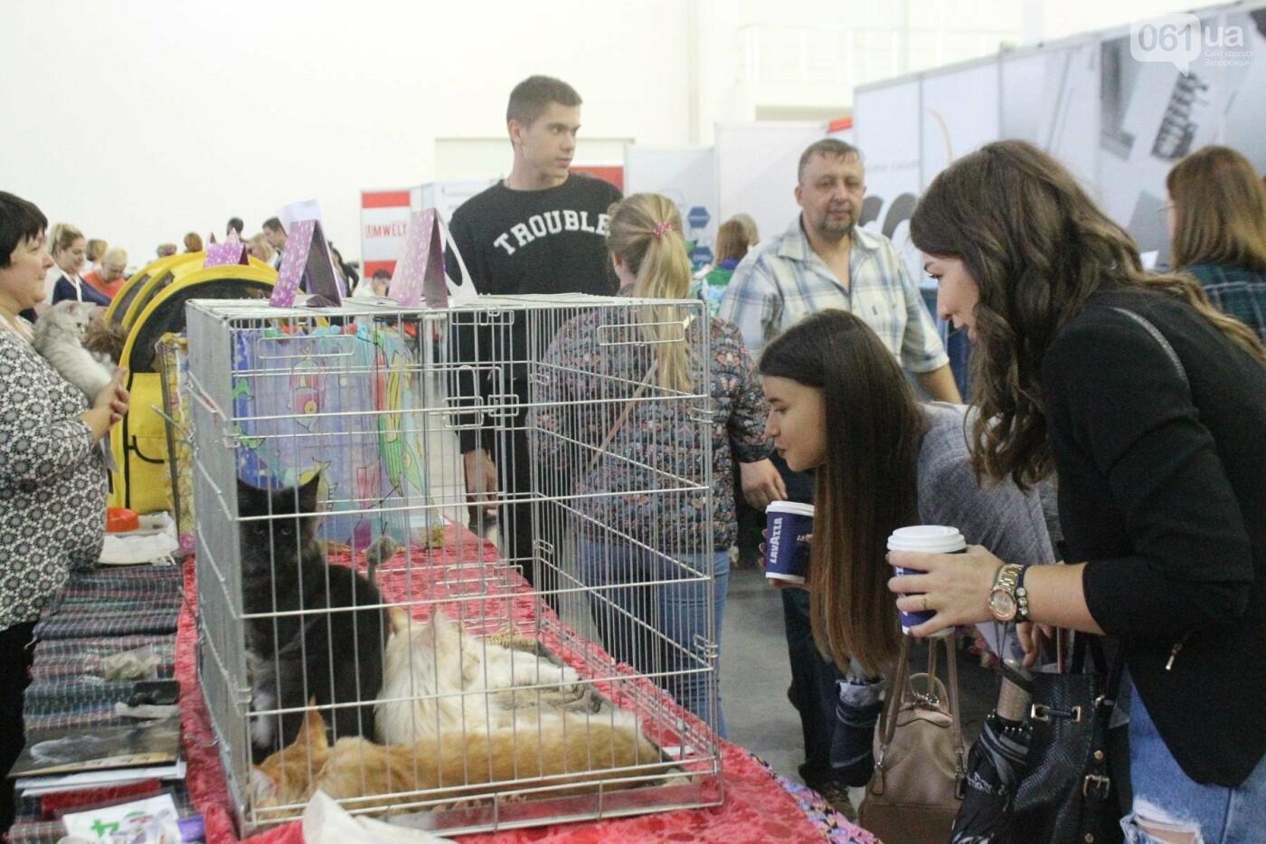 Как в Запорожье проходит международная выставка кошек, – ФОТОРЕПОРТАЖ, фото-6