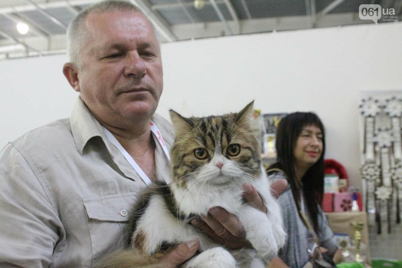 Как в Запорожье проходит международная выставка кошек, – ФОТОРЕПОРТАЖ, фото-32
