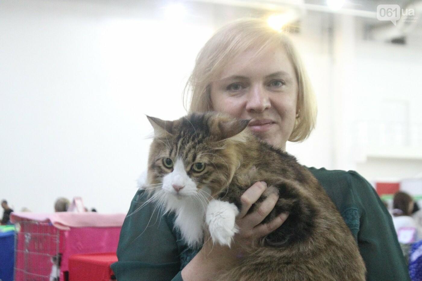 Как в Запорожье проходит международная выставка кошек, – ФОТОРЕПОРТАЖ, фото-17