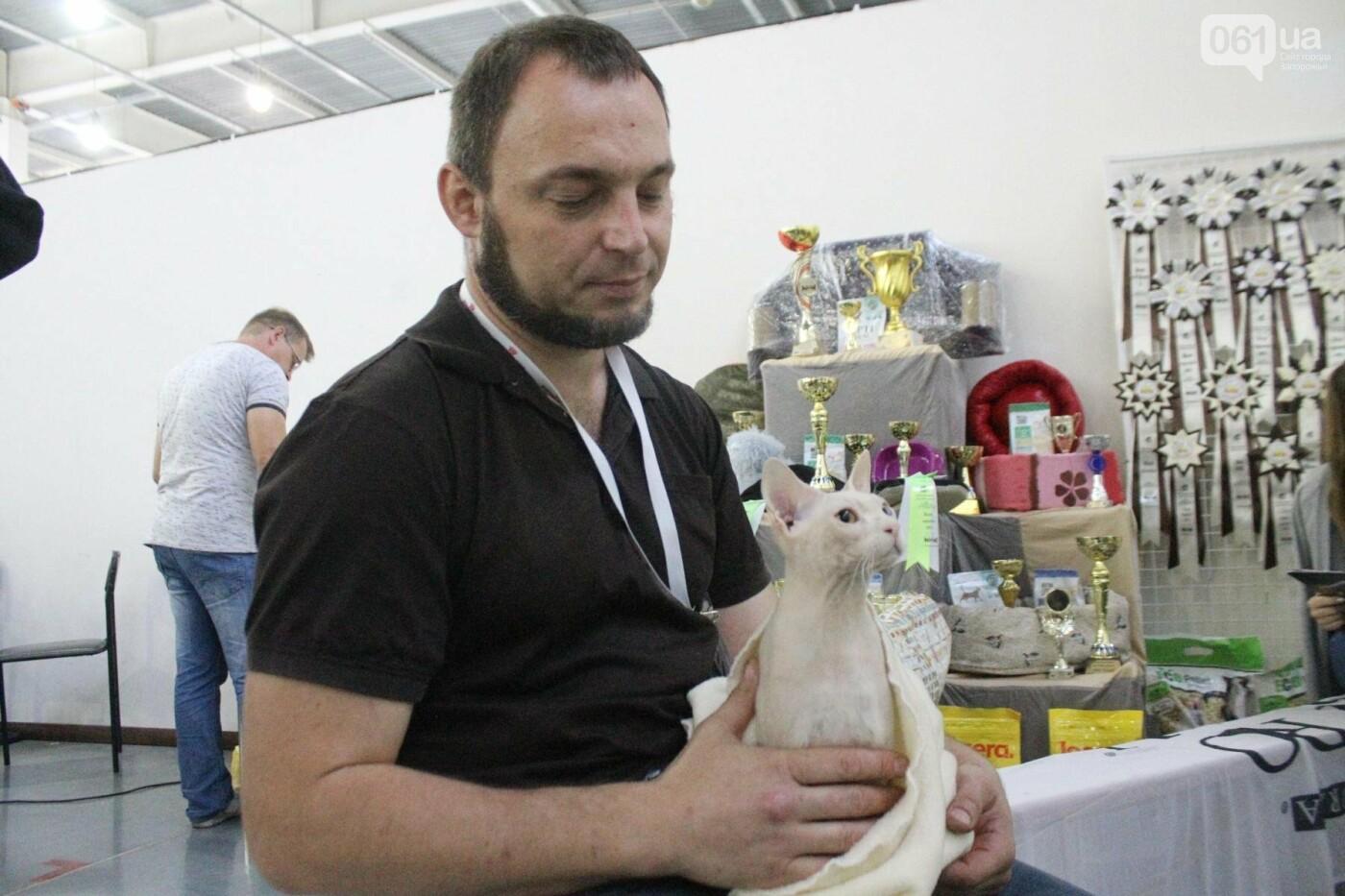 Как в Запорожье проходит международная выставка кошек, – ФОТОРЕПОРТАЖ, фото-35