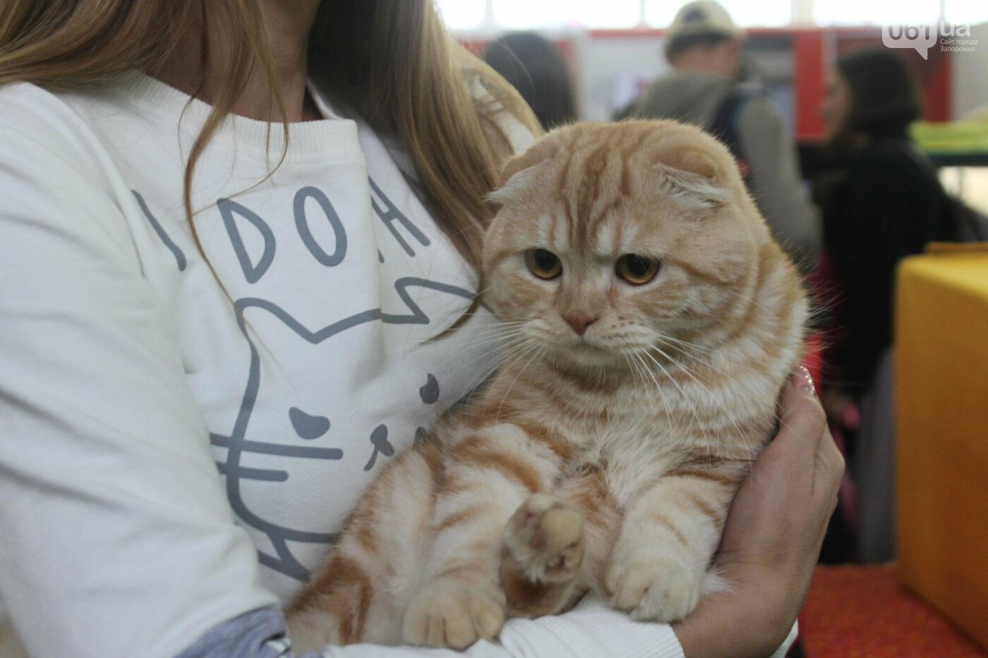 Как в Запорожье проходит международная выставка кошек, – ФОТОРЕПОРТАЖ, фото-20