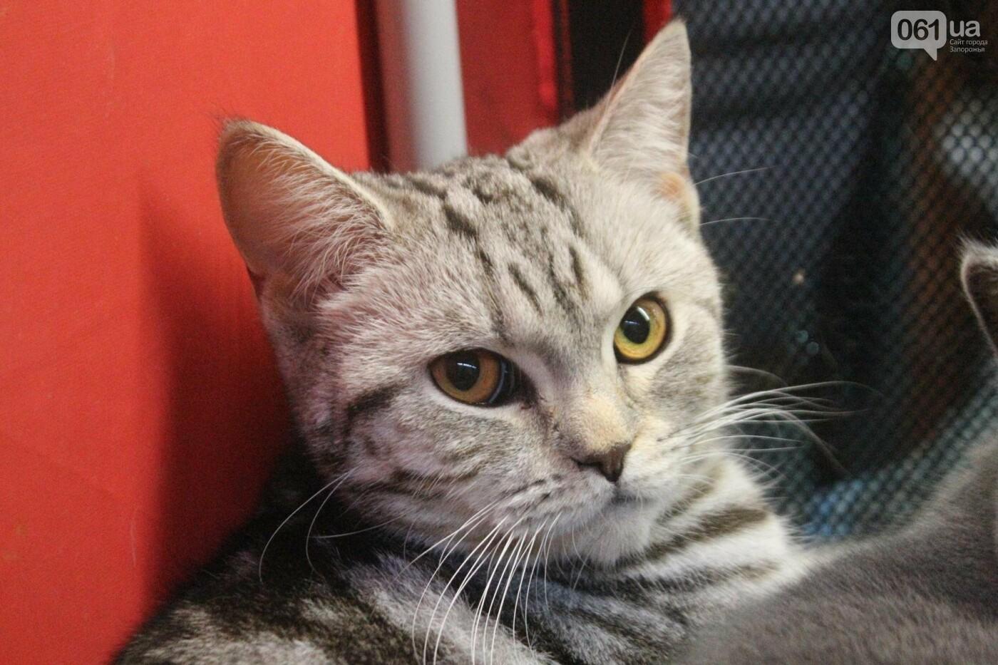 Как в Запорожье проходит международная выставка кошек, – ФОТОРЕПОРТАЖ, фото-57