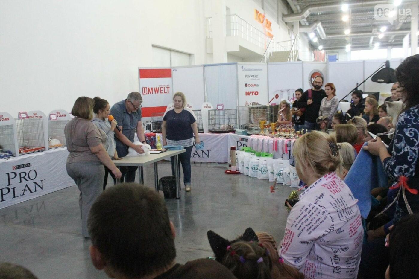 Как в Запорожье проходит международная выставка кошек, – ФОТОРЕПОРТАЖ, фото-7