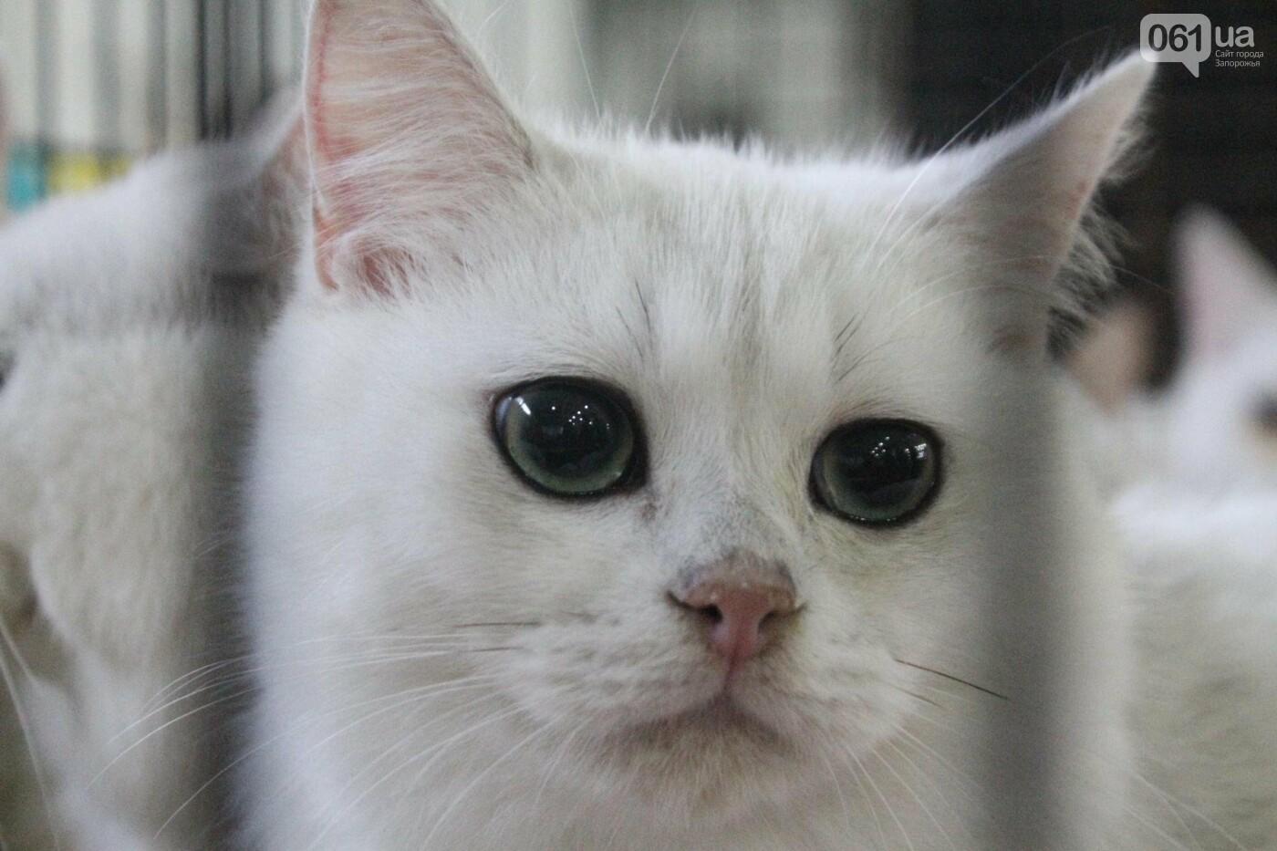 Как в Запорожье проходит международная выставка кошек, – ФОТОРЕПОРТАЖ, фото-40