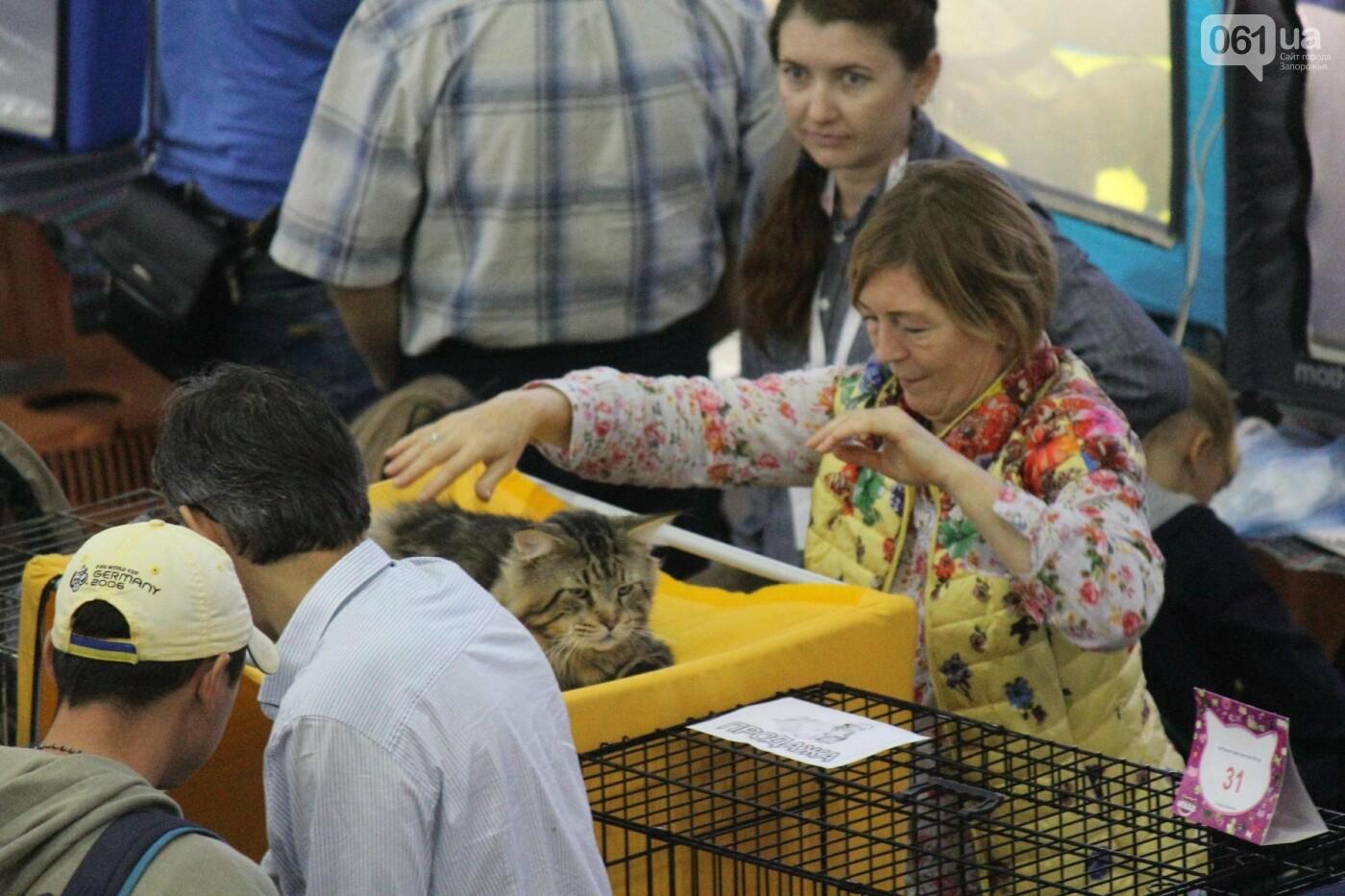 Как в Запорожье проходит международная выставка кошек, – ФОТОРЕПОРТАЖ, фото-2