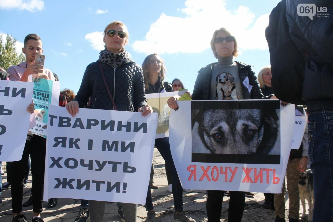 «Защити! Не мучай»: в Запорожье провели марш за права животных, – ФОТОРЕПОРТАЖ, ВИДЕО, фото-8
