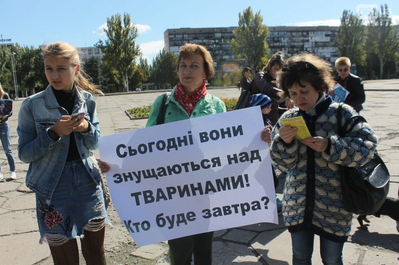 «Защити! Не мучай»: в Запорожье провели марш за права животных, – ФОТОРЕПОРТАЖ, ВИДЕО, фото-11
