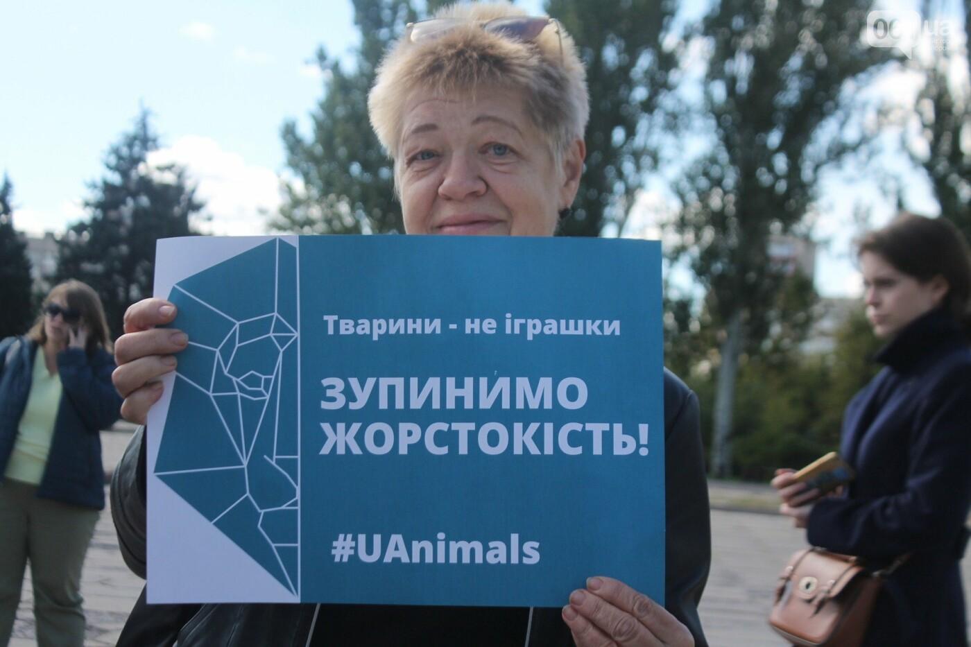 «Защити! Не мучай»: в Запорожье провели марш за права животных, – ФОТОРЕПОРТАЖ, ВИДЕО, фото-5