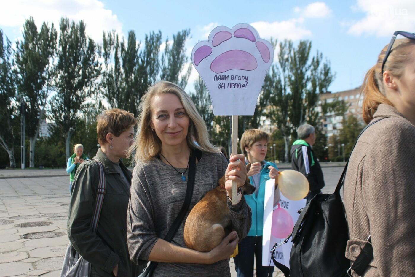«Защити! Не мучай»: в Запорожье провели марш за права животных, – ФОТОРЕПОРТАЖ, ВИДЕО, фото-12