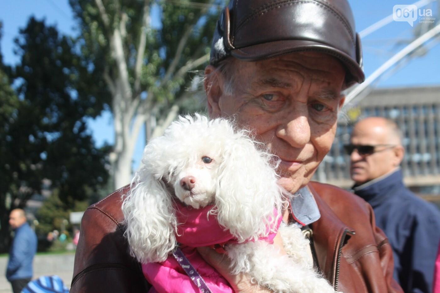 «Защити! Не мучай»: в Запорожье провели марш за права животных, – ФОТОРЕПОРТАЖ, ВИДЕО, фото-10