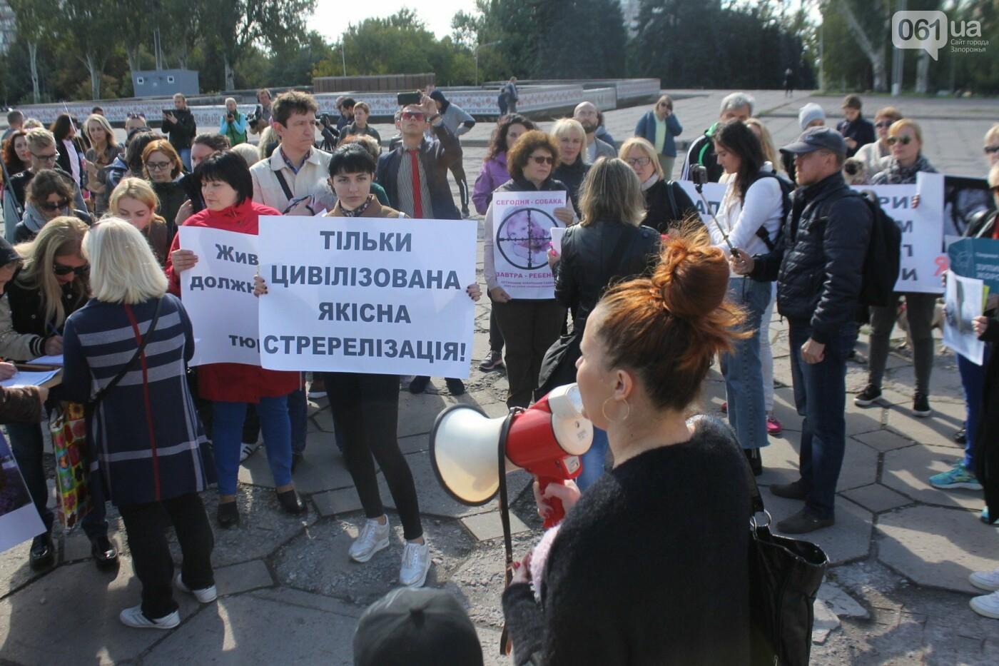 «Защити! Не мучай»: в Запорожье провели марш за права животных, – ФОТОРЕПОРТАЖ, ВИДЕО, фото-16