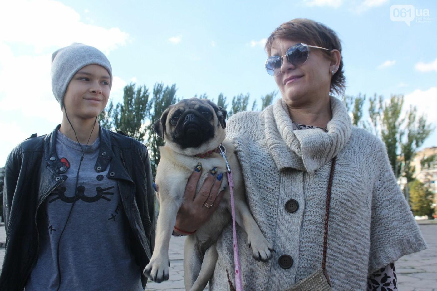 «Защити! Не мучай»: в Запорожье провели марш за права животных, – ФОТОРЕПОРТАЖ, ВИДЕО, фото-15