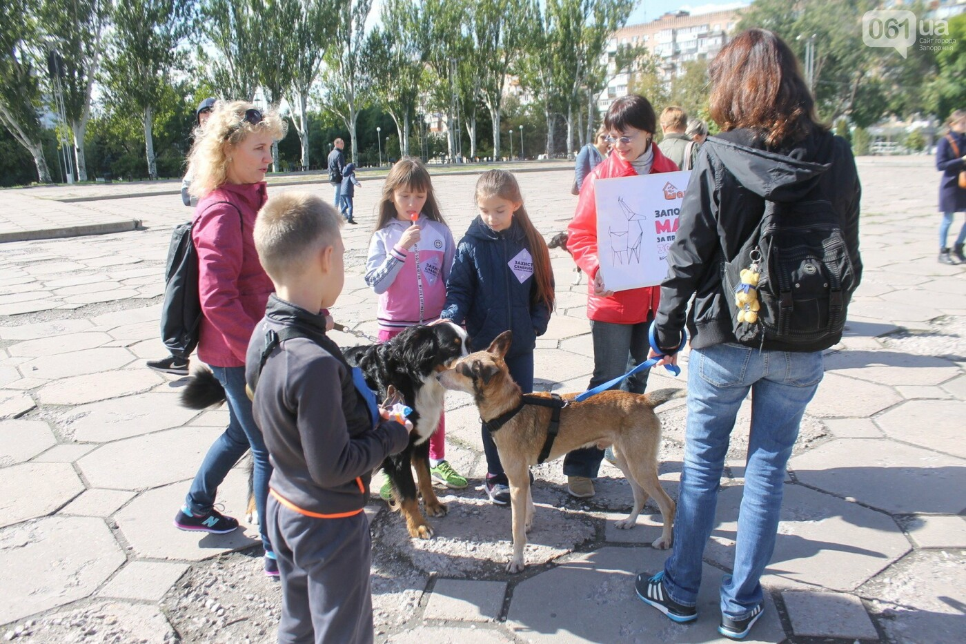 «Защити! Не мучай»: в Запорожье провели марш за права животных, – ФОТОРЕПОРТАЖ, ВИДЕО, фото-19