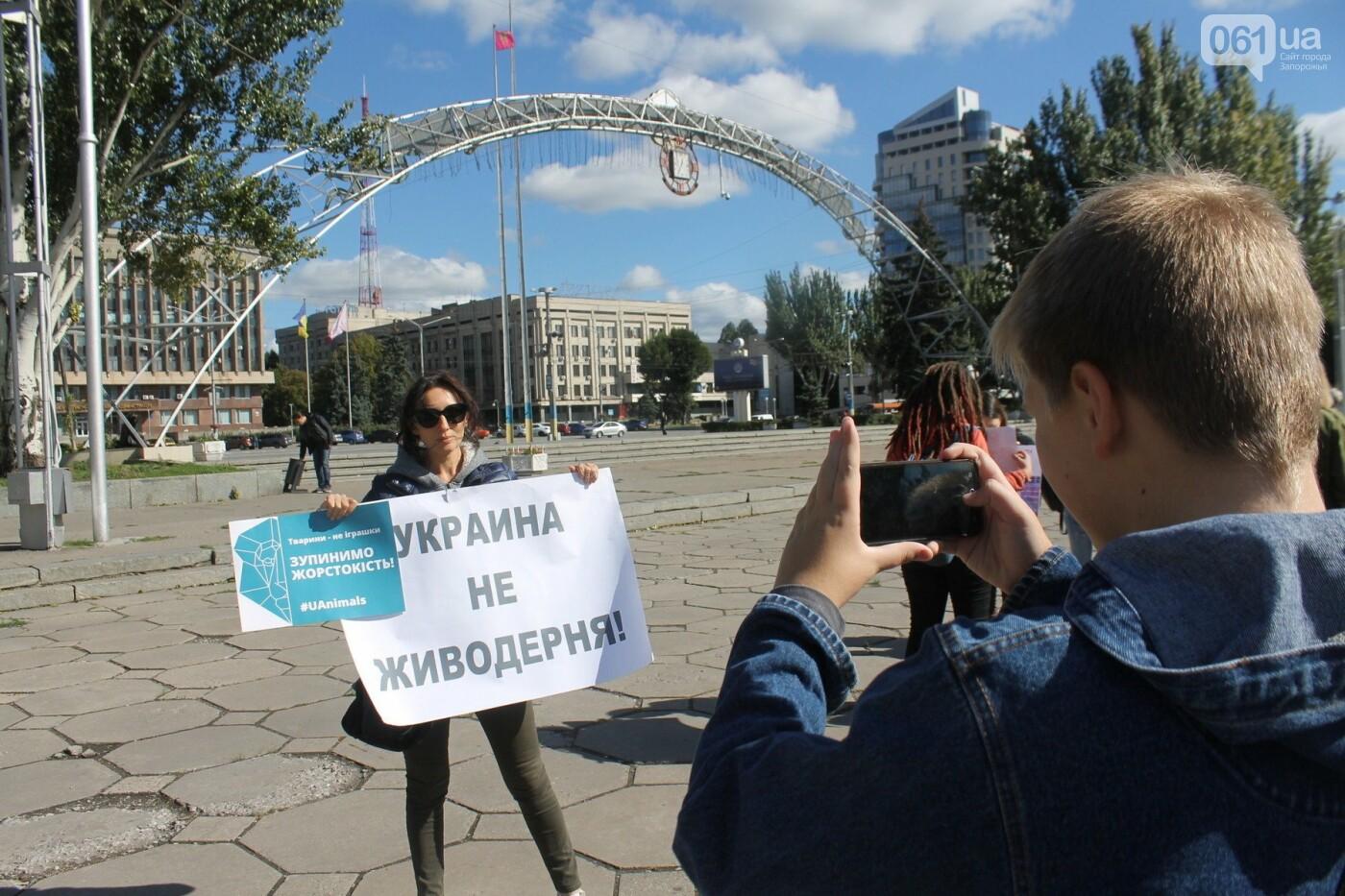 «Защити! Не мучай»: в Запорожье провели марш за права животных, – ФОТОРЕПОРТАЖ, ВИДЕО, фото-18