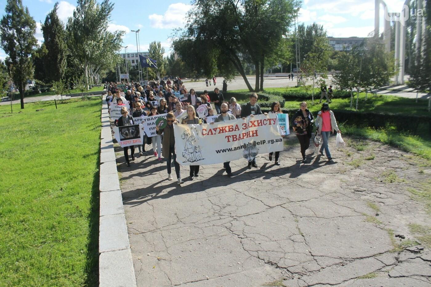 «Защити! Не мучай»: в Запорожье провели марш за права животных, – ФОТОРЕПОРТАЖ, ВИДЕО, фото-21
