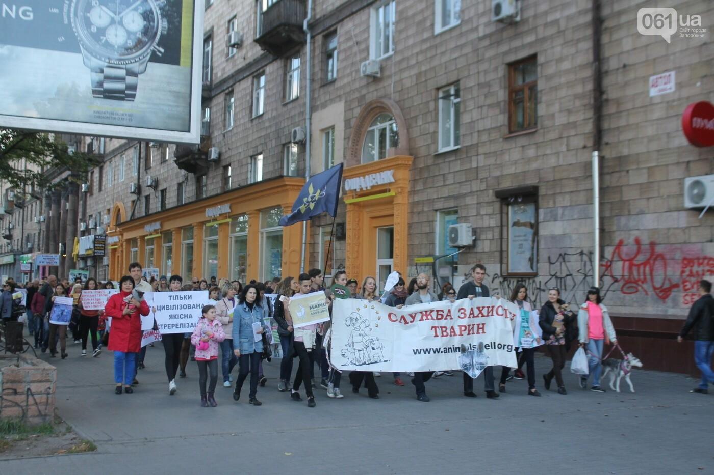 «Защити! Не мучай»: в Запорожье провели марш за права животных, – ФОТОРЕПОРТАЖ, ВИДЕО, фото-25