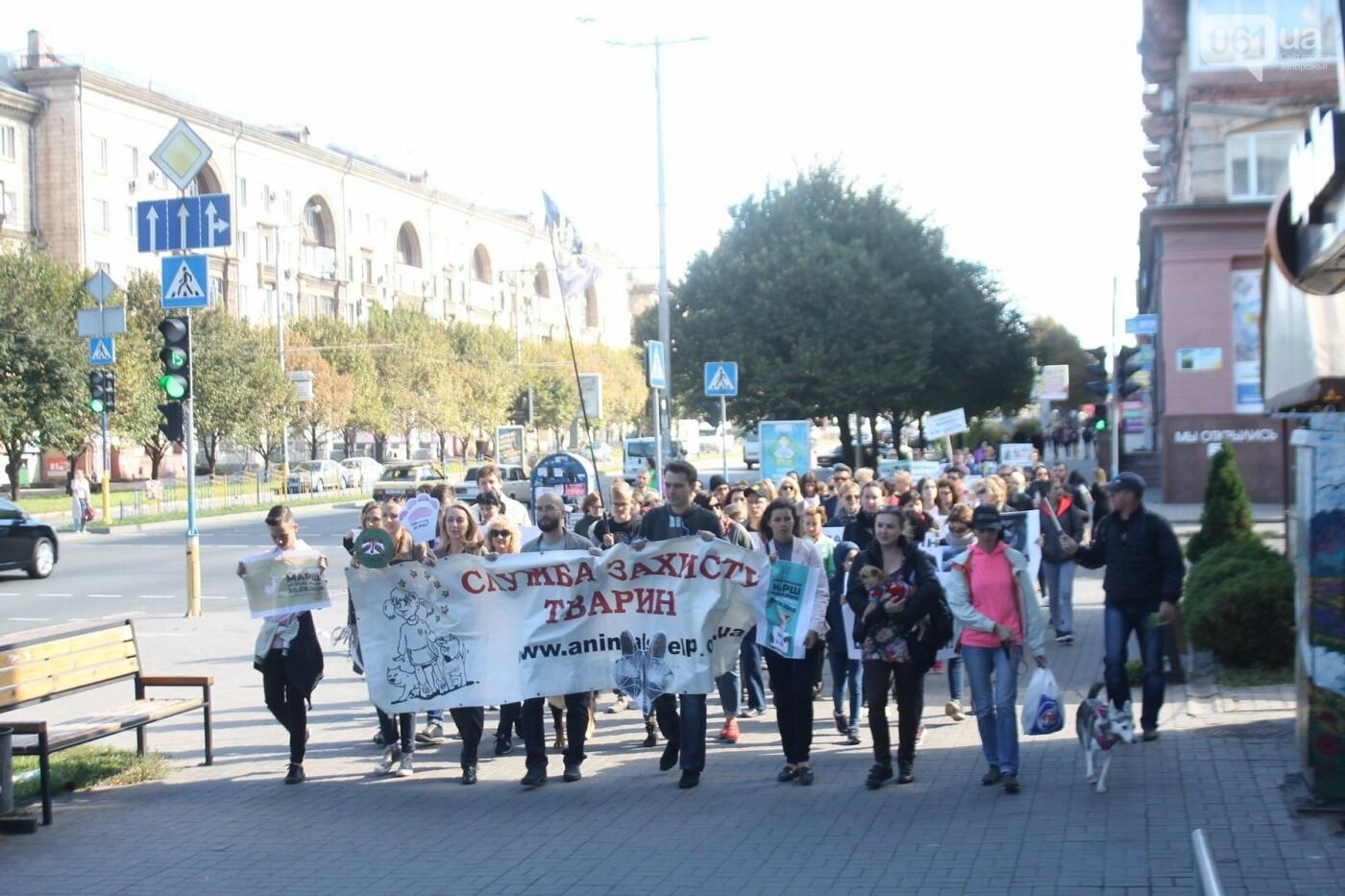 «Защити! Не мучай»: в Запорожье провели марш за права животных, – ФОТОРЕПОРТАЖ, ВИДЕО, фото-26