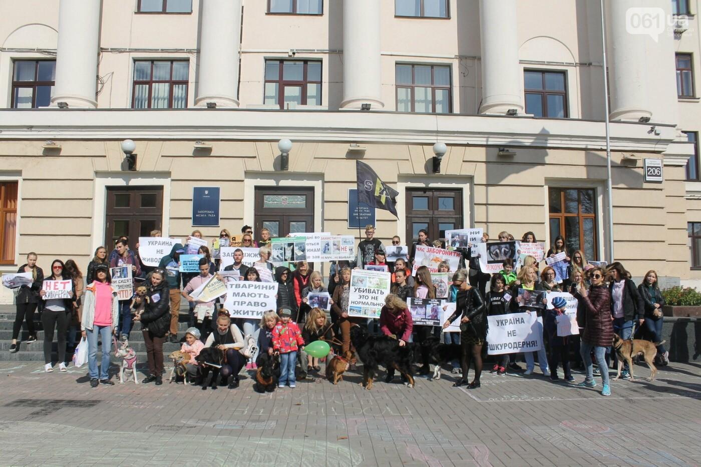 «Защити! Не мучай»: в Запорожье провели марш за права животных, – ФОТОРЕПОРТАЖ, ВИДЕО, фото-27