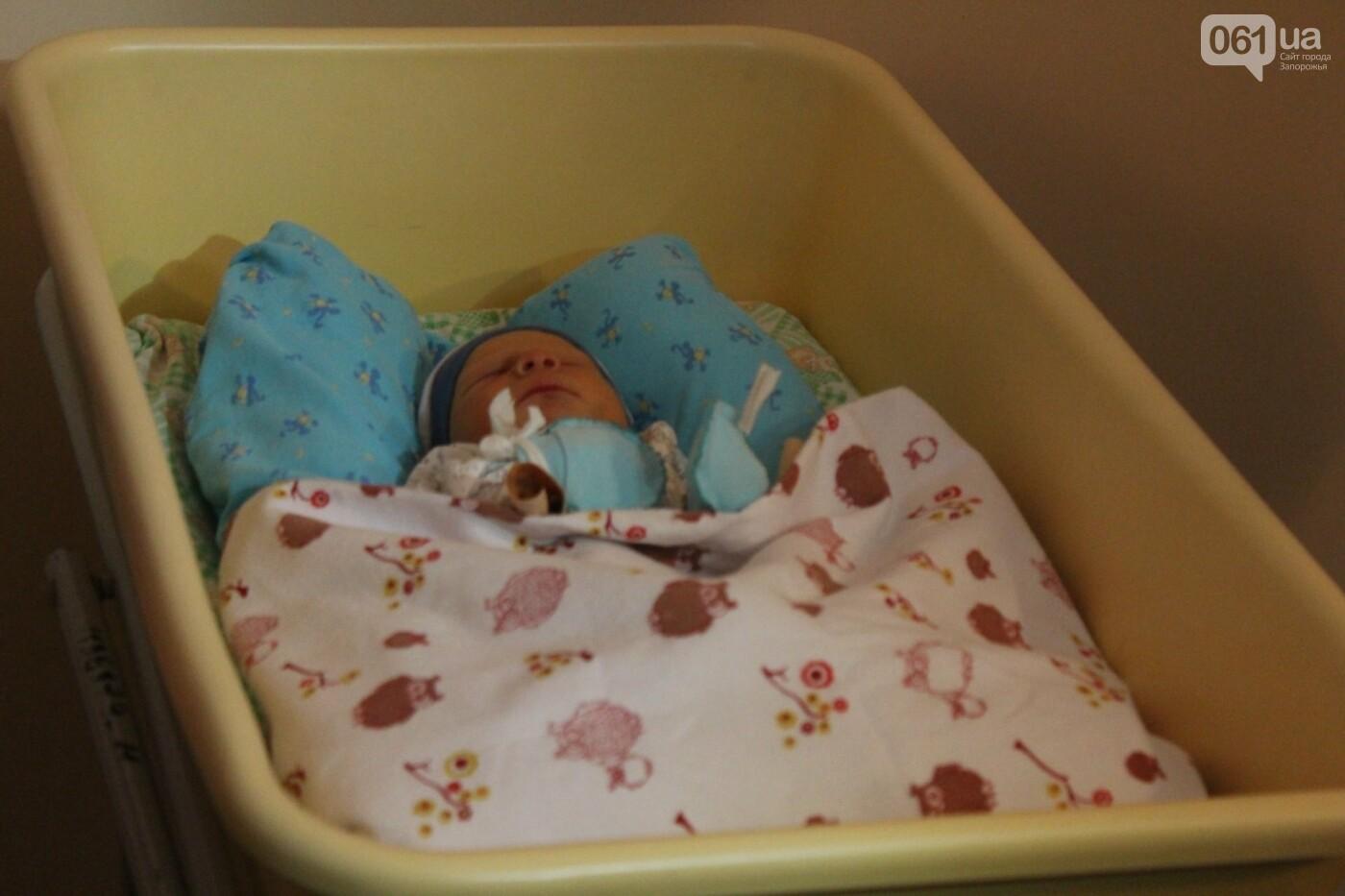 В Запорожье 1 января родились четыре мальчика и девочка, - ФОТО, фото-1