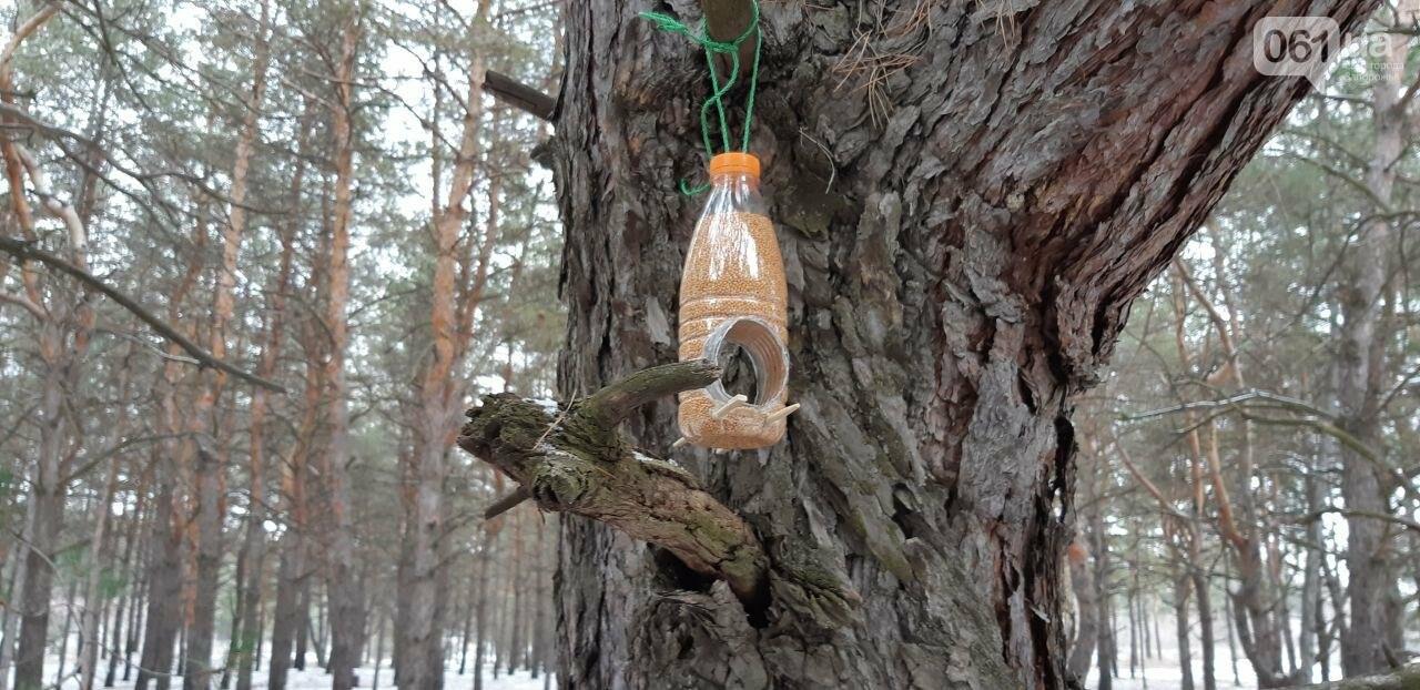 Запорожцы вышли на первую в этом году традиционную подкормку птиц на Хортице, - ФОТОРЕПОРТАЖ, фото-12
