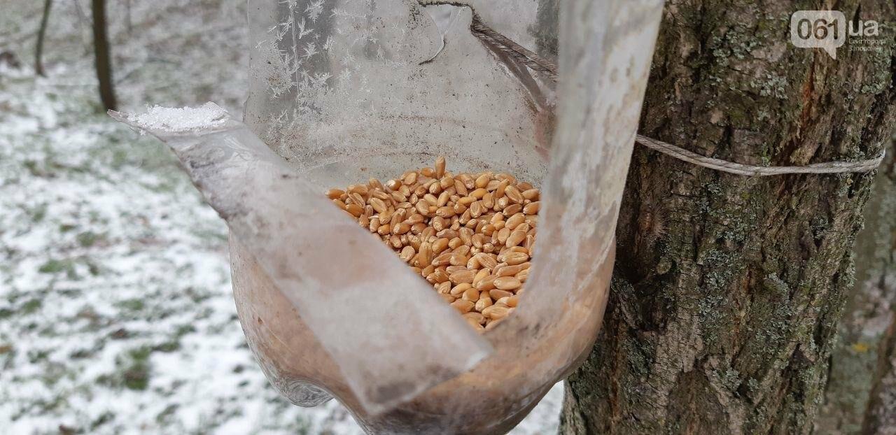 Запорожцы вышли на первую в этом году традиционную подкормку птиц на Хортице, - ФОТОРЕПОРТАЖ, фото-6