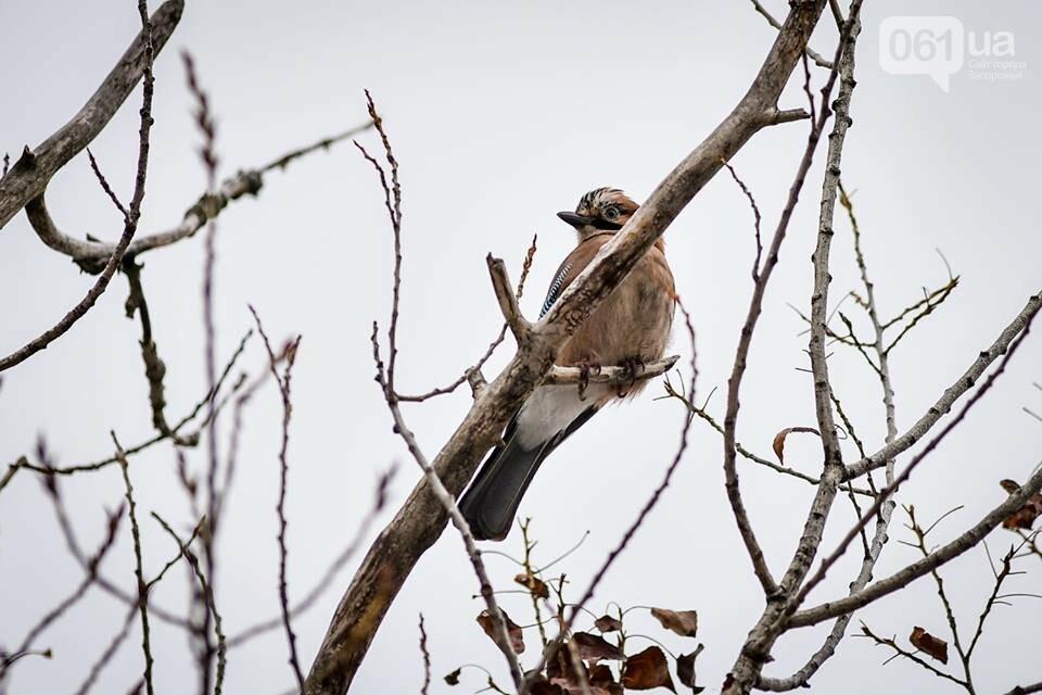Запорожцы вышли на первую в этом году традиционную подкормку птиц на Хортице, - ФОТОРЕПОРТАЖ, фото-28