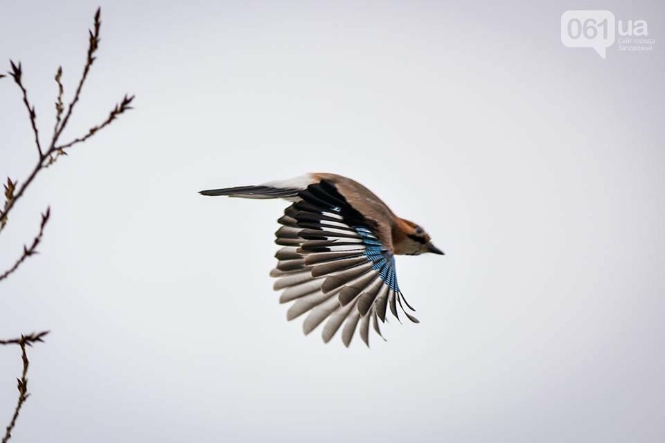 Запорожцы вышли на первую в этом году традиционную подкормку птиц на Хортице, - ФОТОРЕПОРТАЖ, фото-32