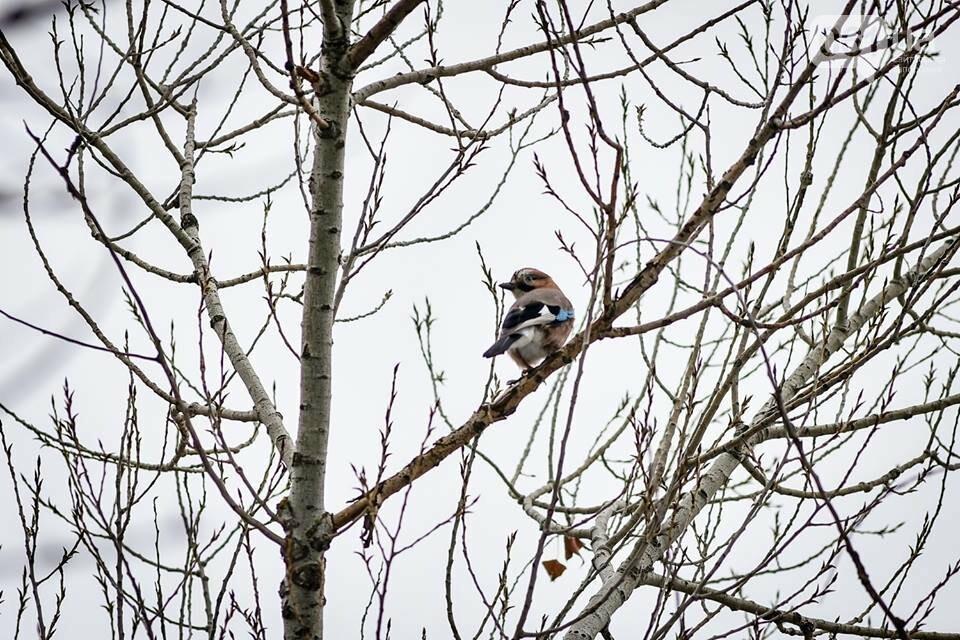Запорожцы вышли на первую в этом году традиционную подкормку птиц на Хортице, - ФОТОРЕПОРТАЖ, фото-30