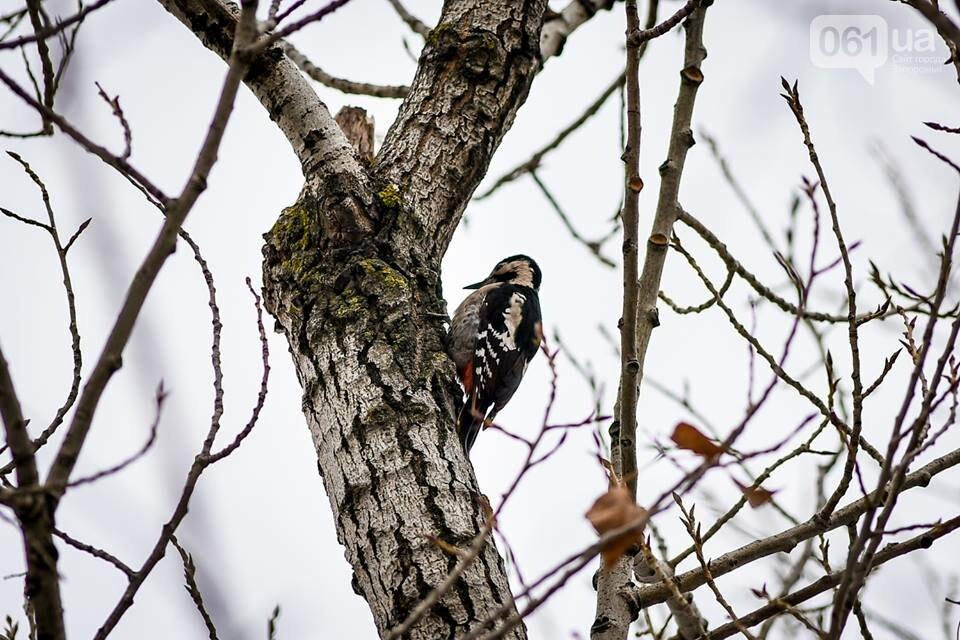 Запорожцы вышли на первую в этом году традиционную подкормку птиц на Хортице, - ФОТОРЕПОРТАЖ, фото-29
