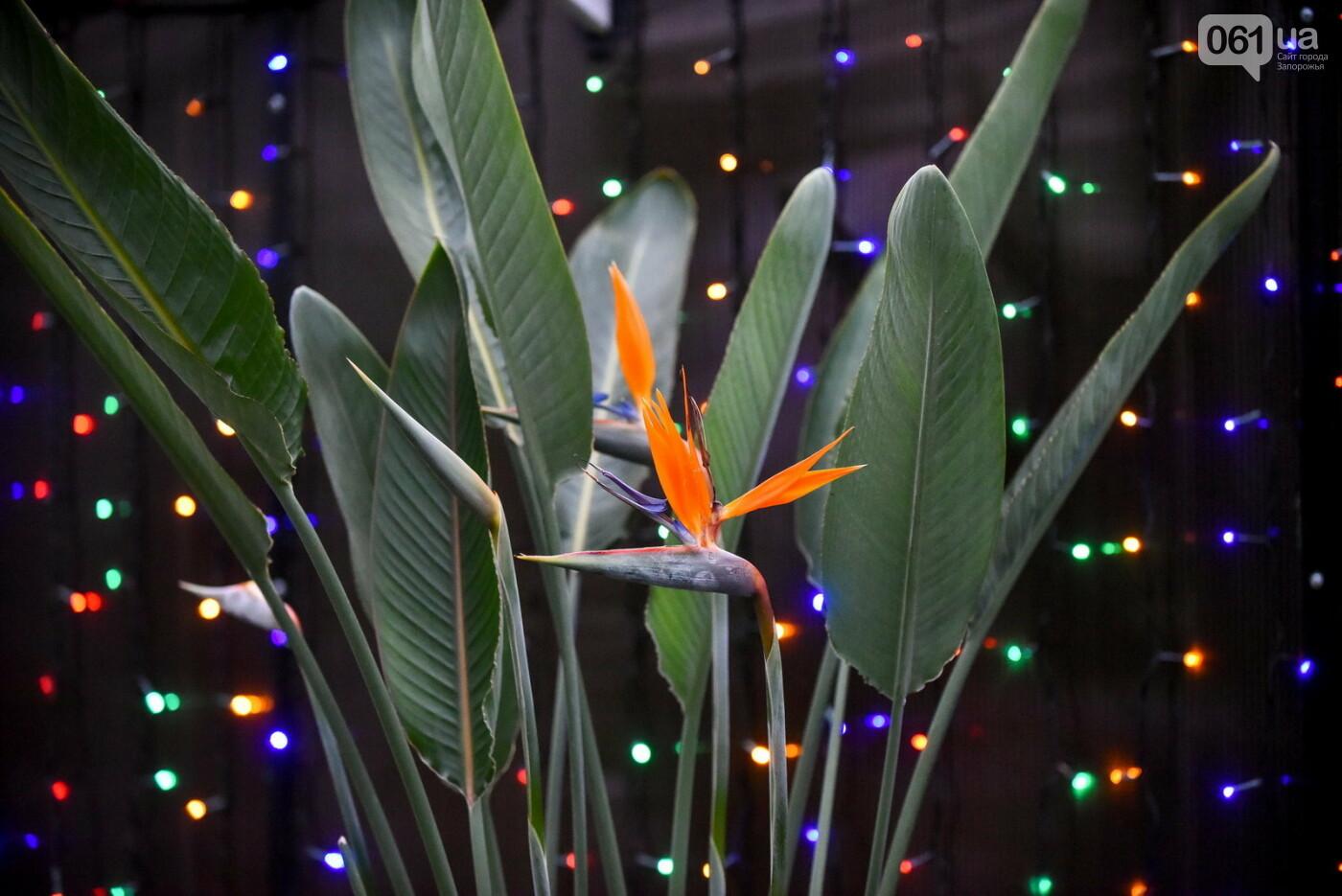 """Бананы, кинкан, огромные лимоны и """"райская птица"""" - запорожский ботанический сад в фотографиях, фото-3"""
