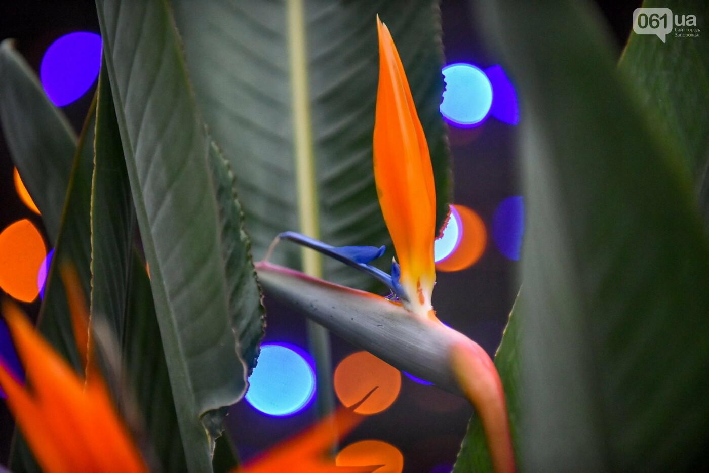 """Бананы, кинкан, огромные лимоны и """"райская птица"""" - запорожский ботанический сад в фотографиях, фото-4"""