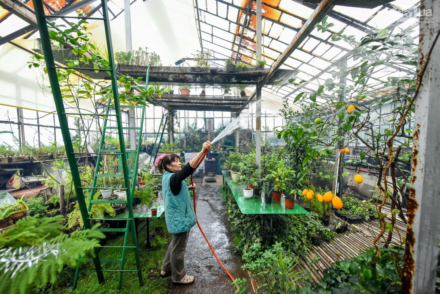 """Бананы, кинкан, огромные лимоны и """"райская птица"""" - запорожский ботанический сад в фотографиях, фото-19"""