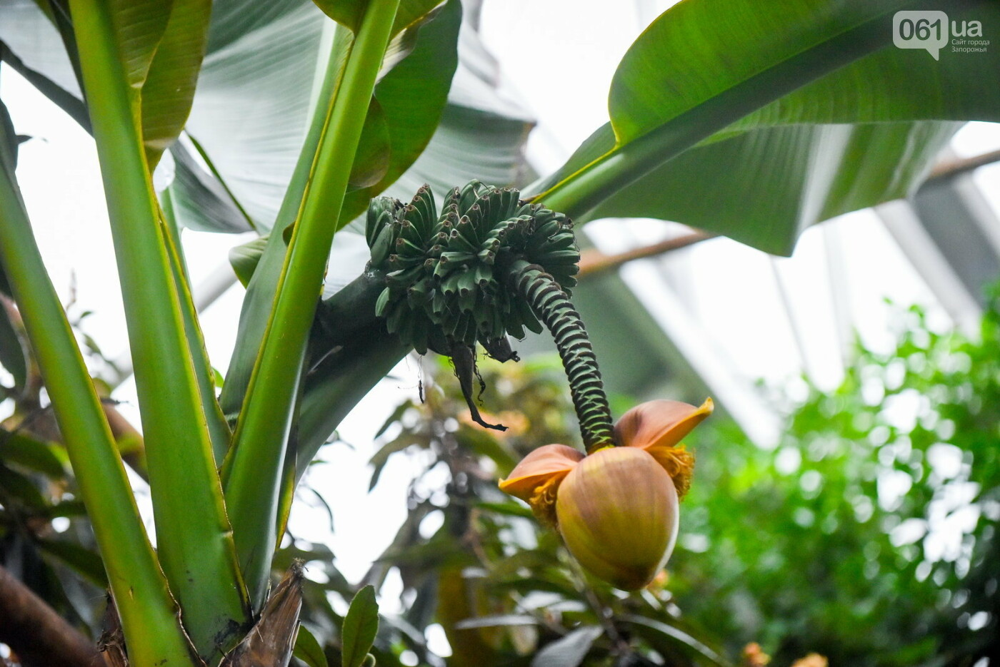 """Бананы, кинкан, огромные лимоны и """"райская птица"""" - запорожский ботанический сад в фотографиях, фото-8"""