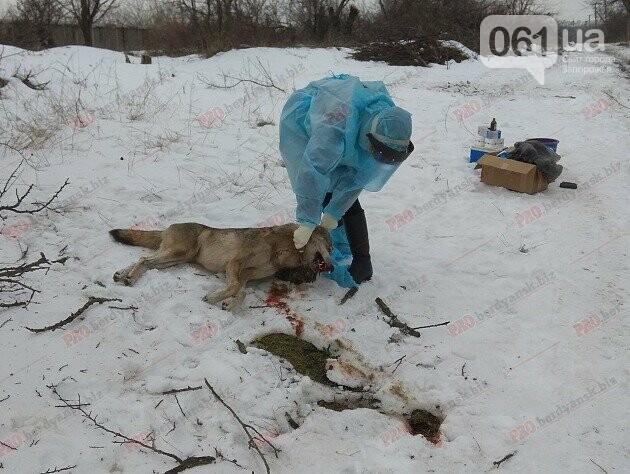 В Запорожской области волк искусал троих людей: они госпитализированы, - ФОТО, фото-1