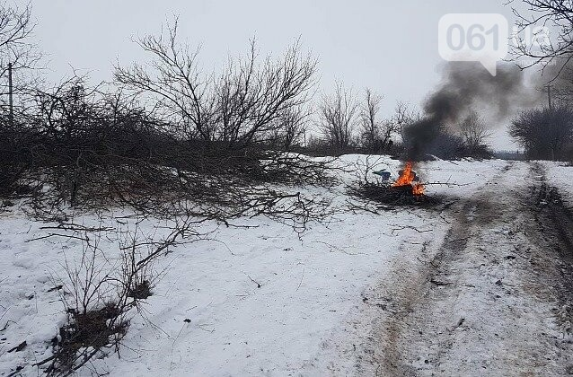 В Запорожской области волк искусал троих людей: они госпитализированы, - ФОТО, фото-2