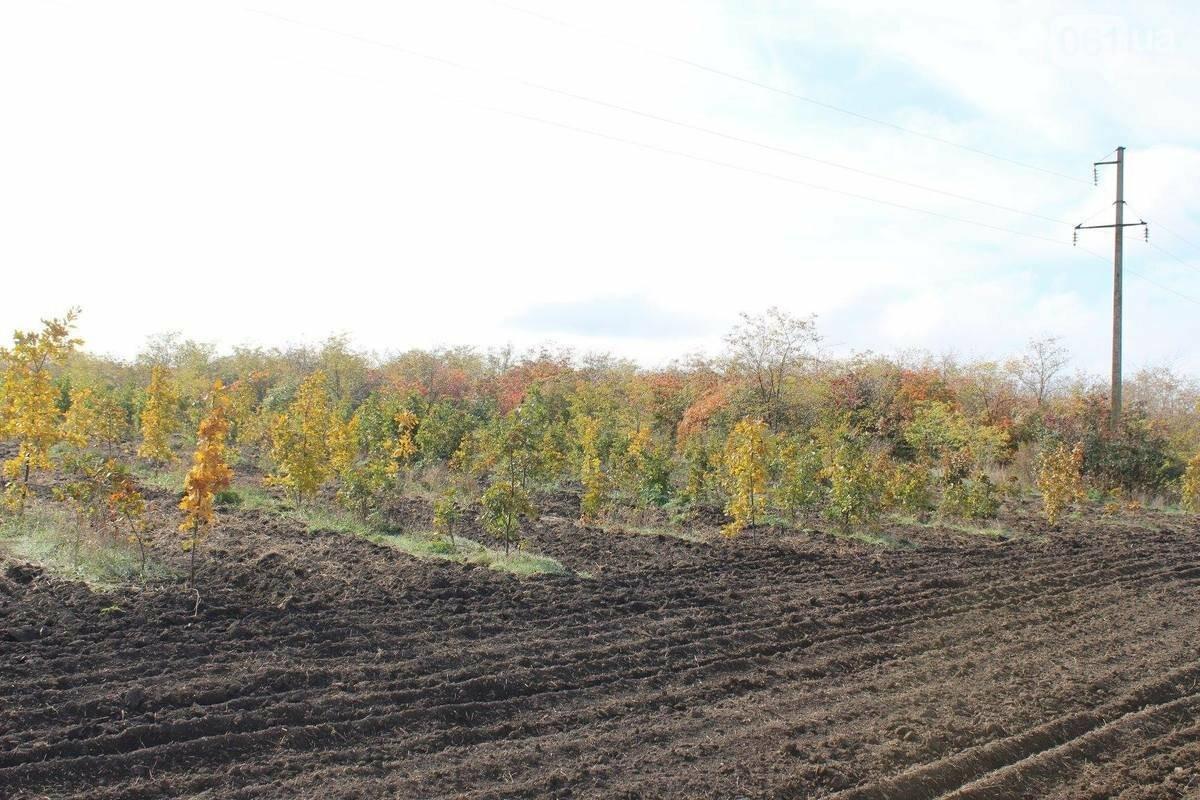 На создание лесов в Запорожской области собираются потратить больше 4 миллионов, фото-1