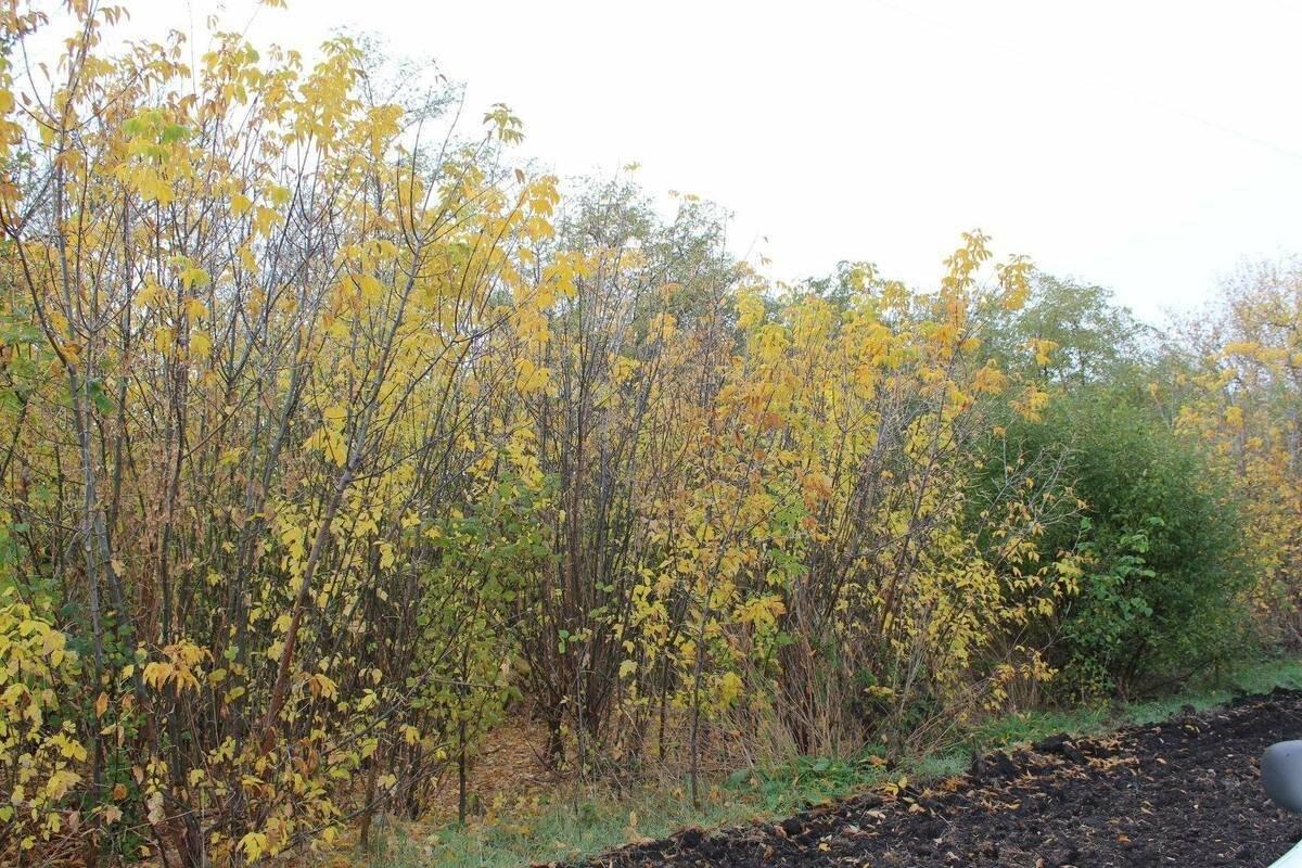 На создание лесов в Запорожской области собираются потратить больше 4 миллионов, фото-2