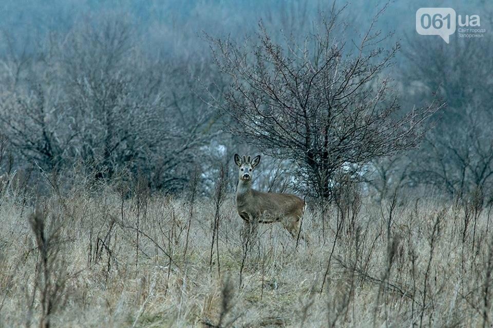 Запорожский фотограф-натуралист запечатлел на Хортице диких оленей и кабанов, – ФОТО, фото-2